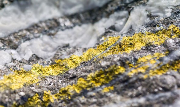 Scientists discover Fungus that collects gold from its environment