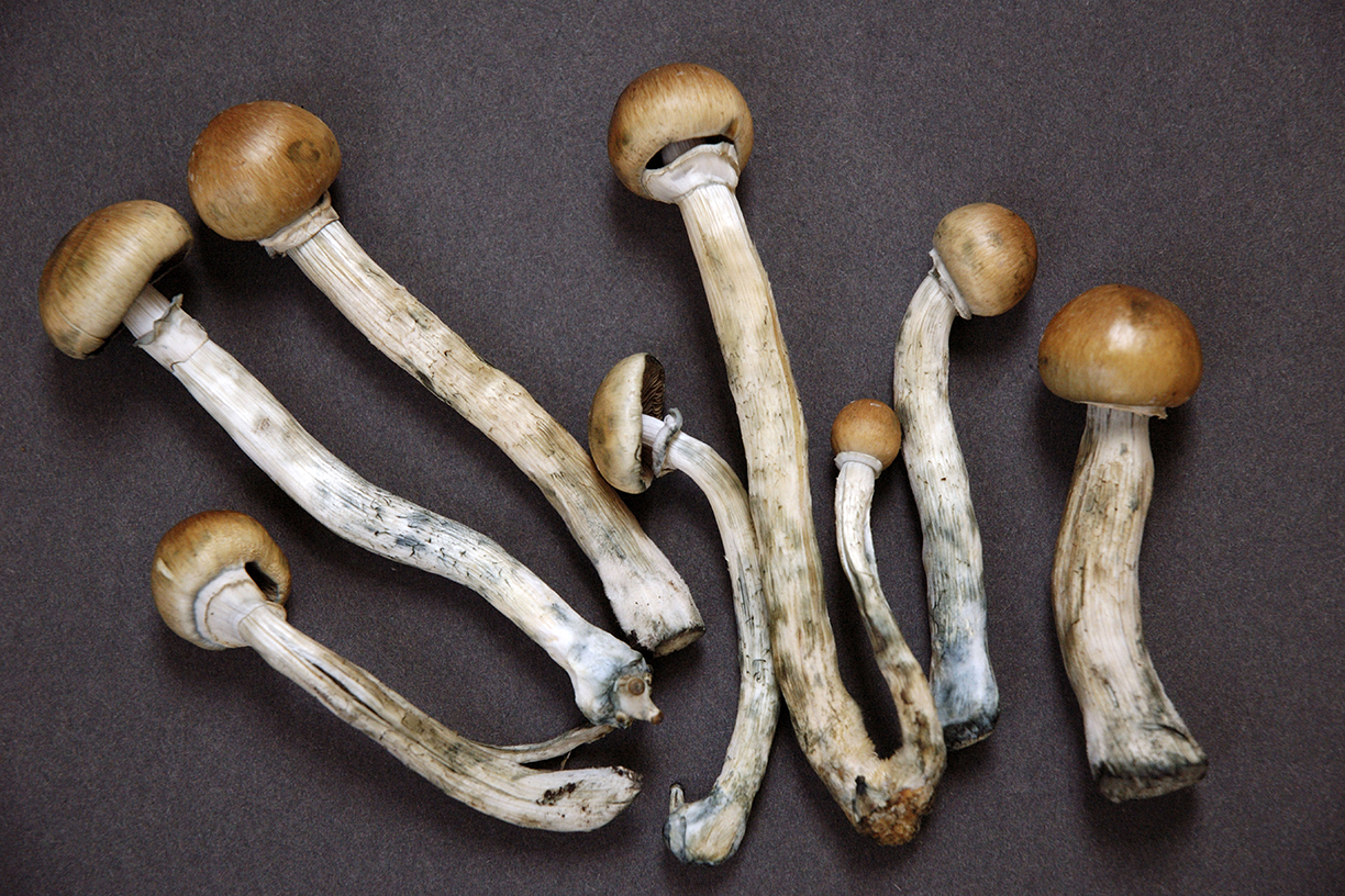 Denevr is Finally Decreminalize psychedelic mushrooms
